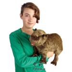 plyšová Kapybara, plyšová hračka