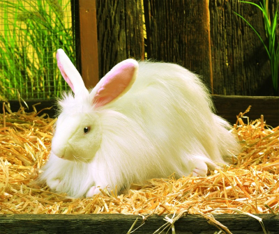 Plyšová hračka: Angorský králík plyšový | Folkmanis