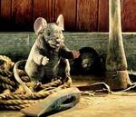plyšová Šedivá myš