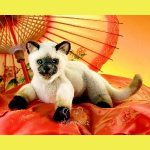 plyšová Siamská kočka