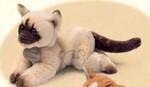 plyšové Himalájsko-perská kočka, plyšová hračka