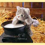 plyšové Mourovaté kotě