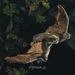 plyšový Hnědý netopýr