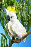 plyšový Papoušek Kakadu