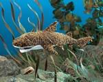 plyšový Žralok leopardí