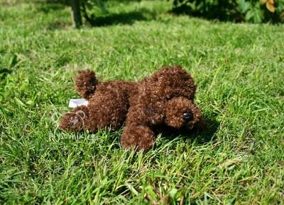 Plyšová hračka: Pudl Grantham štěně plyšový | Russ Berrie