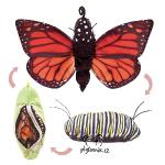 plyšový Motýl monarcha stěhovavý