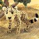 gepard-velky-plysovy