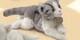 Plyšová hračka: Mourovatá kočka plyšová, Russ Berrie