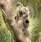 Plyšová hračka: Koala mládě plyšový, Folkmanis