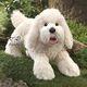Plyšová hračka: Bílý chlupatý pes plyšový, Folkmanis