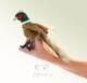 Plyšová hračka: Bažant na prst plyšový, Folkmanis
