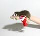 Plyšová hračka: Přejetý ježek - EMO plyšový, RoadKill Toys