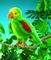 plysovy-papousek-amazonan-sedy-2592.jpg