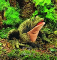 Plyšová hračka: Ropucha plyšová, Folkmanis