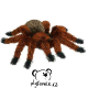 plysova-tarantule