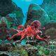 plysova-chobotnice-folkmanis-cervena-podmorska