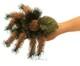 Plyšová hračka: Tarantule plyšová, Folkmanis