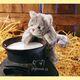 Plyšová hračka: Mourovaté kotě plyšové, Folkmanis