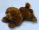 Plyšová hračka: Hnědý pudl menší plyšový, Russ Berrie