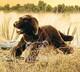 Plyšová hračka: Hnědý labrador plyšový, Folkmanis