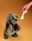 Plyšová hračka: Pes sedící plyšový, Folkmanis