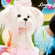 Plyšová hračka: Maltézáček Lucky Mimi Rosette plyšák, Orange Toys