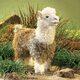 plysova-lama-alpaca