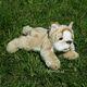 Plyšová hračka: Buldog Roddy štěně plyšový, Russ Berrie