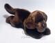 Plyšová hračka: Hnědý labrador štěně plyšový, Russ Berrie
