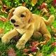 Plyšová hračka: Štěně labradora plyšové, Folkmanis