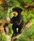 Plyšová hračka: Mládě medvěda černého plyšové, Folkmanis