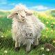 plysova-ovce-dlouhosrsta-folkmanis