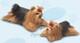 Plyšová hračka: Štěně jorkšírský teriér plyšové, Russ Berrie