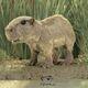 kapybara-folkmanis-3098