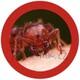 Plyšová hračka: Červený mravenec plyšový, GiantMicrobes